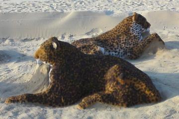 Panthère et guépard sur la plage d'Arcachon